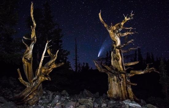 Picture of Comet behind bristlecone- Charles Reed